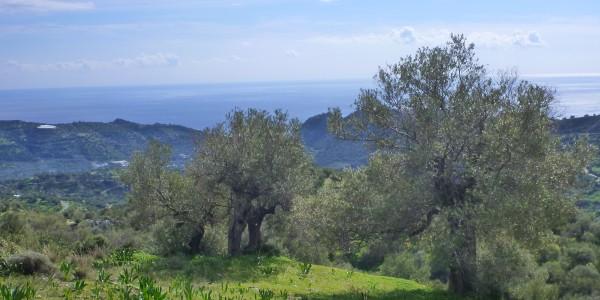 Crète  (25)